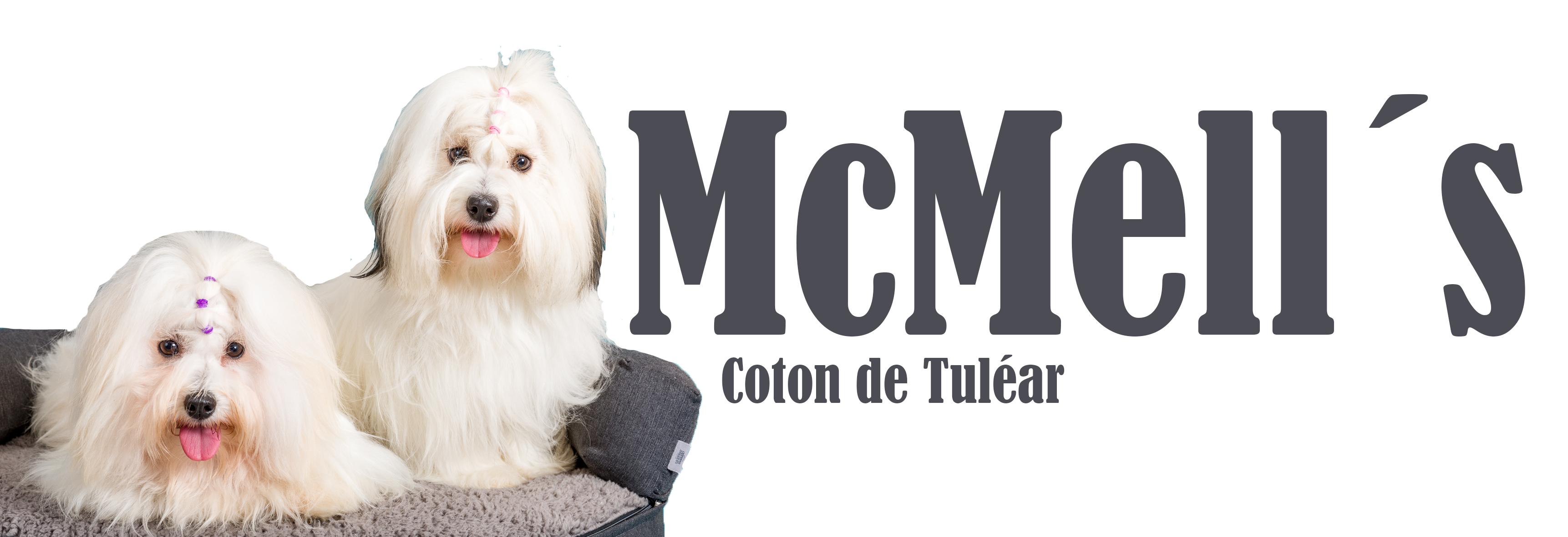 McMells Coton de Tulear